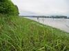 fraser-river-marshland-foreshore-survey