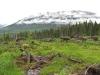 terrestrial-habitat-survey-wells-bc