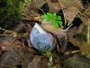 oregon-forestsnail-abbotsford