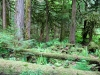 coniferous-forest-hemlock-valley