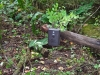 motion-activated-wildlife-camera-surrey-bend