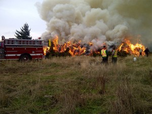 Burning Gorse and Scotch Broom – Vancouver Island.