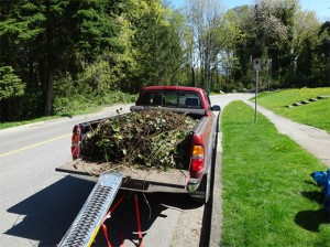English Ivy Removal and Disposal.